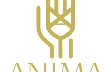 Anima – David Wagner – Massagen