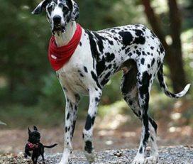 Pico Bello hundetagspension und friseur