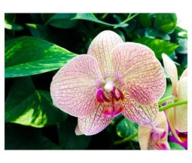 Vasana-Orchidee Thai-Massage